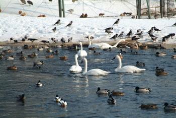 зимовье птиц